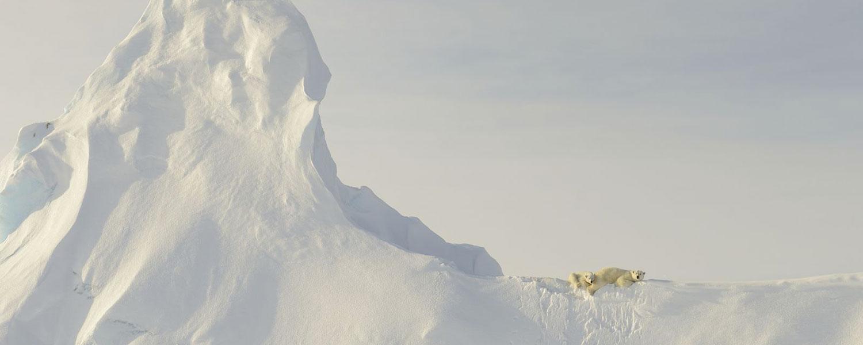 neve, orsi polari come evidenza del suo. Necessario per arrivare ovunque